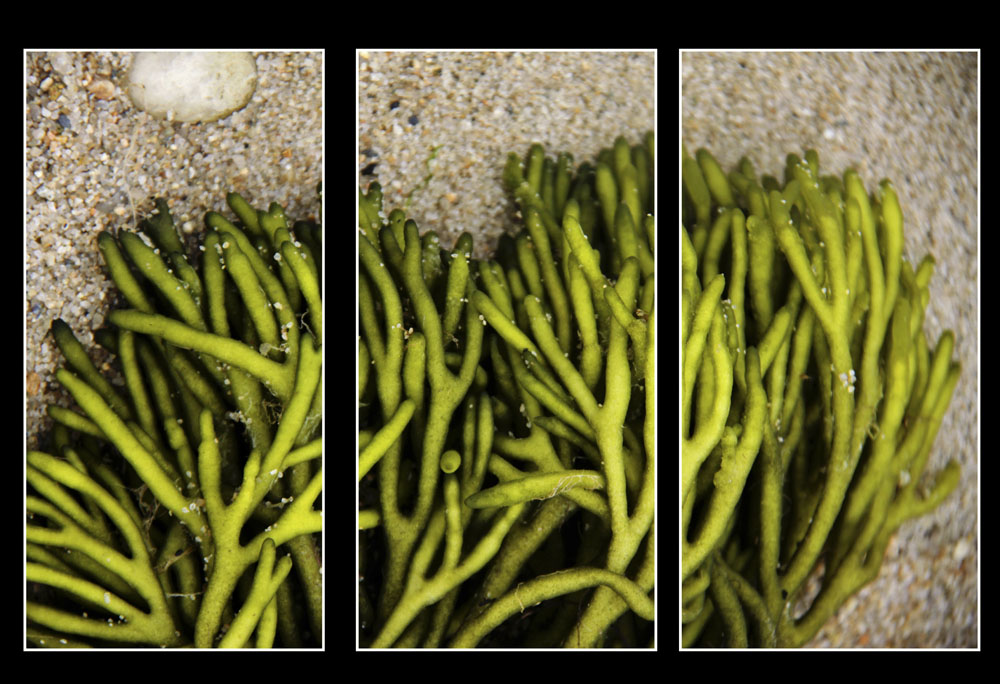 TENDRILS (#0625 TRIPTYCH)
